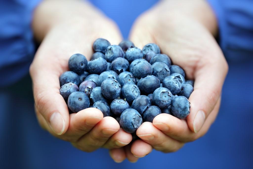Fresh Blueberries - Willson International
